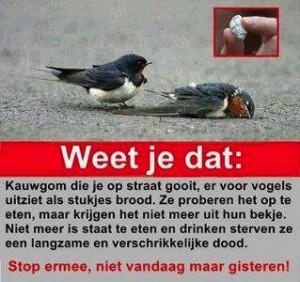 kauwgum-dood-vogels