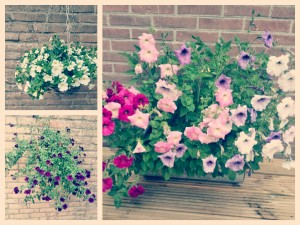 bloemenbakken