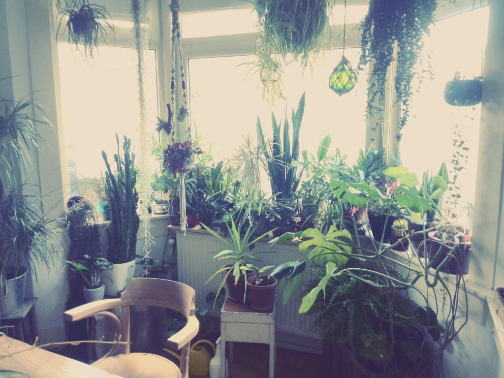 De planten bij Femke
